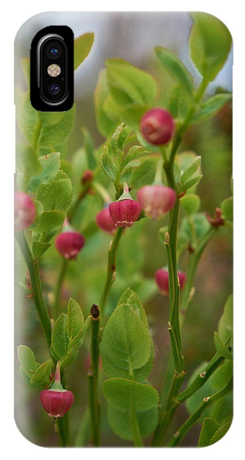 2012 IPhone X Case featuring the photograph Bilberry Flowers by Jouko Lehto
