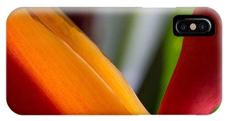 Bird Of Paradise IPhone X Case featuring the photograph Bird Of Paradise by Roger Mullenhour