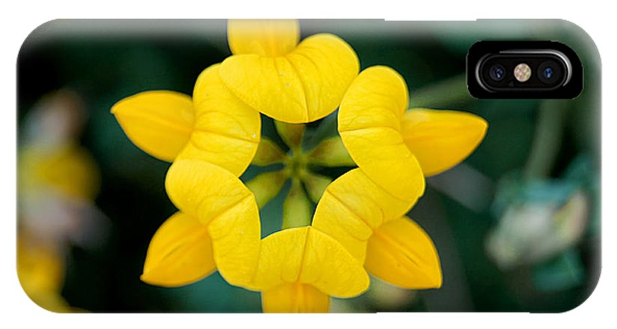 Birdsfoot IPhone X Case featuring the photograph Bird's Foot Trefoil by Bill Pevlor