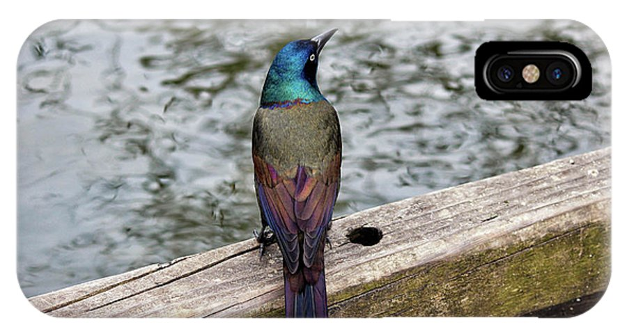 Grackle IPhone X Case featuring the photograph Birds Of A Feather Don't.. by Rachel Cohen