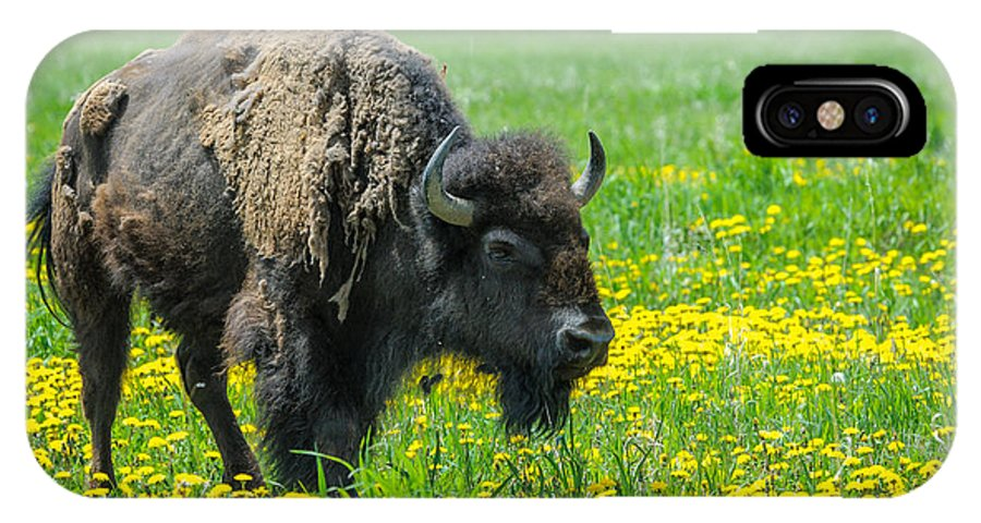Mormon Row IPhone X Case featuring the photograph Bison And Friend by Charlie Choc