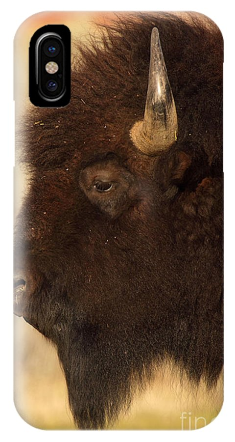 American Bison IPhone X Case featuring the photograph Bison In Profile by Max Allen