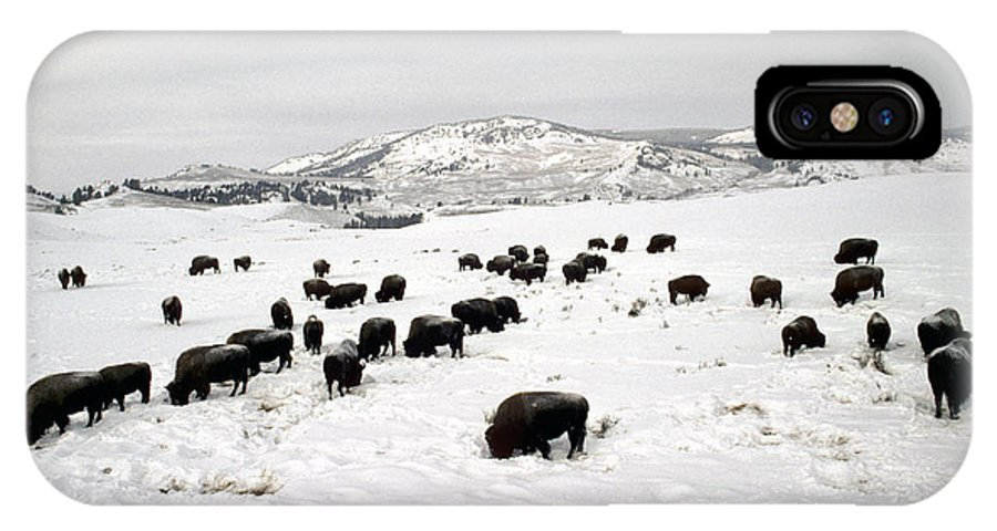 Nobody IPhone X Case featuring the photograph Bison Paw Away Snow With Head by Michael S. Quinton