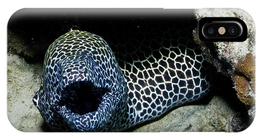 Eel IPhone X Case featuring the photograph Black And White Honeycomb Moray Eel by Mathieu Meur