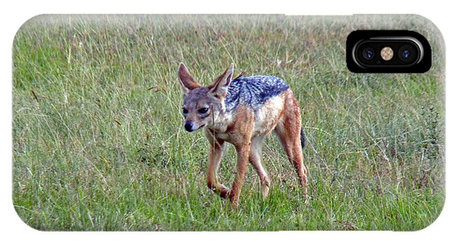 Black-backed Jackal IPhone X Case featuring the photograph Black Backed Jackal by Tony Murtagh