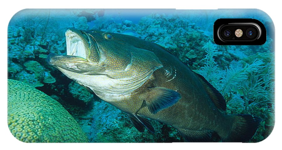 Mycteroperca Bonaci IPhone X / XS Case featuring the photograph Black Grouper by Alexis Rosenfeld