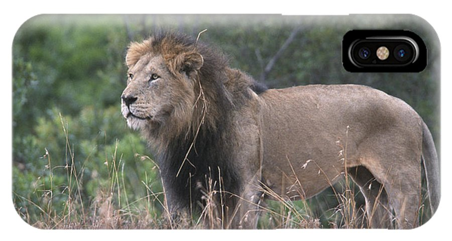 Lion IPhone X Case featuring the photograph Black Maned Lion by Sandra Bronstein