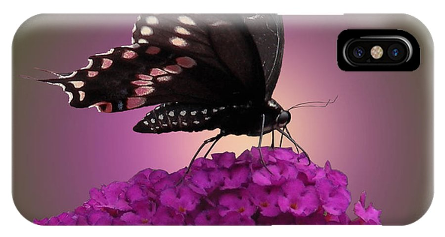 Faunagraphs IPhone X Case featuring the photograph Black Swallowtail 1 by Torie Tiffany