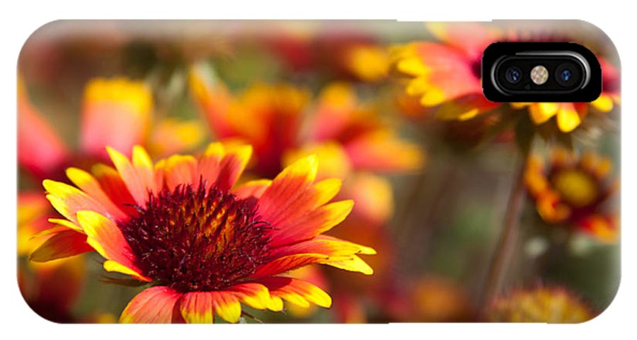 Flora IPhone X Case featuring the photograph Blanket Flowers by Lynne Jenkins