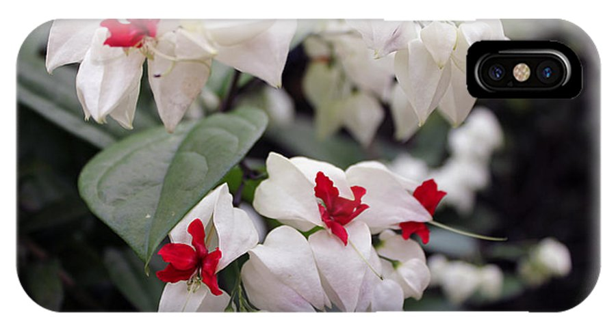 Flowers IPhone X / XS Case featuring the photograph Bleeding Hearts by Deborah Hughes