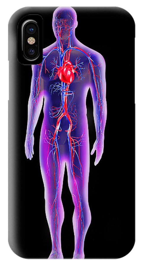 People Person Persons IPhone X / XS Case featuring the photograph Blood Circulation System by Pasieka