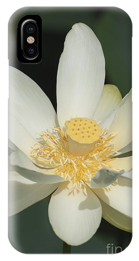 Lily IPhone X Case featuring the photograph Blooming Lily by Ruth H Curtis