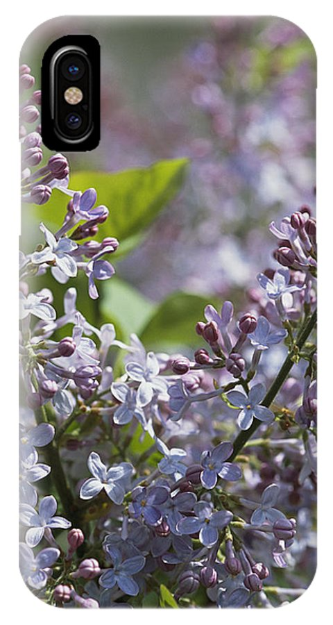 North America IPhone X Case featuring the photograph Blossoming Hyacinthiflora Lilacs by Darlyne A. Murawski