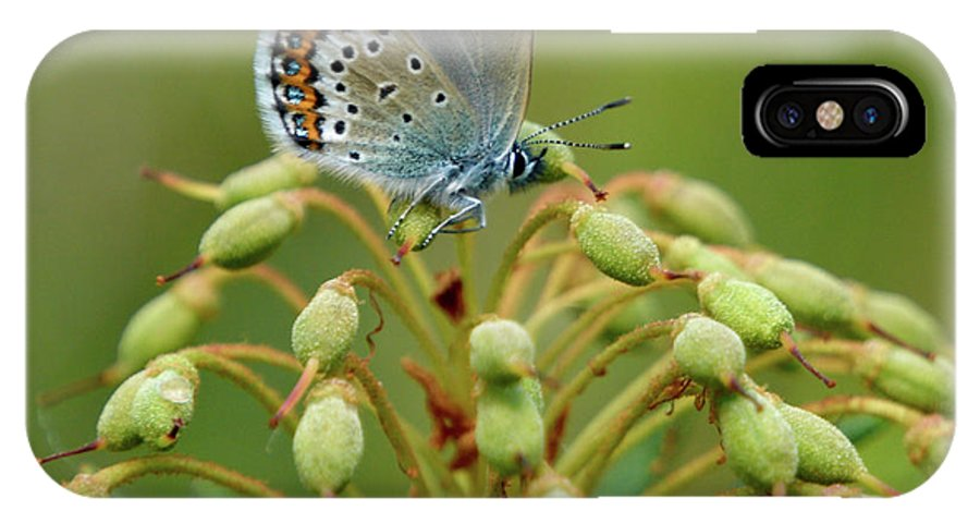 Sinisiipi IPhone X Case featuring the photograph Blue 3 by Jouko Lehto