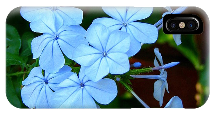 Blue IPhone X Case featuring the photograph Blue Blossoms by Carla Parris
