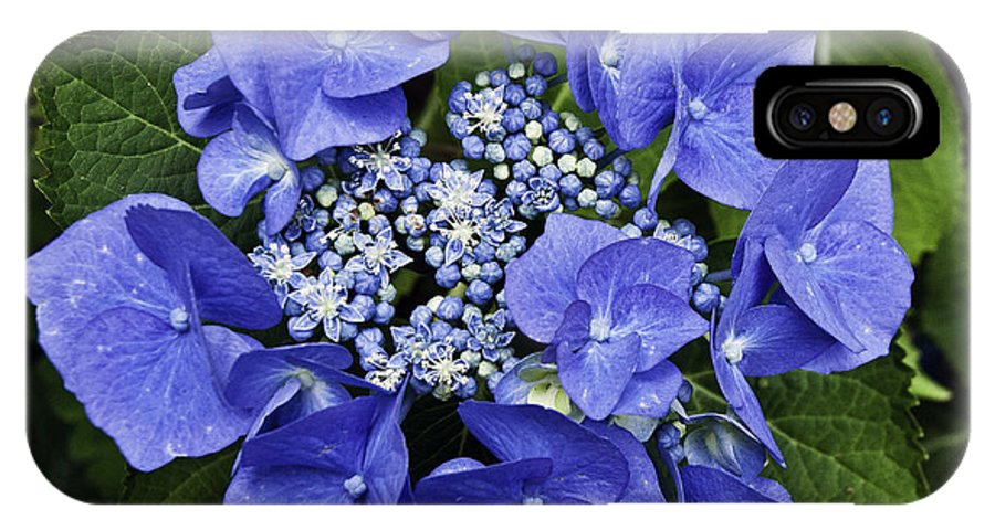 Hydrangea IPhone X Case featuring the photograph Blue Blossoms by Jim Chamberlain