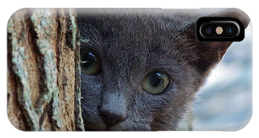 Cat IPhone X Case featuring the photograph Russian Blue,cat by Sandra Reeves