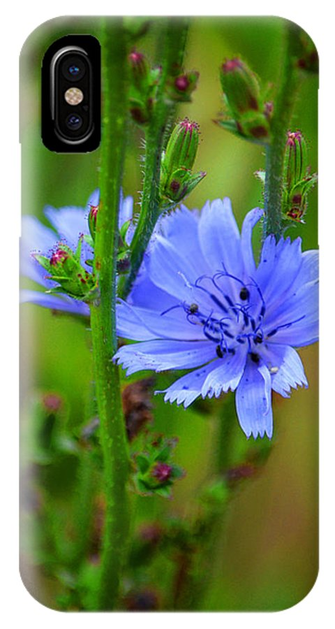 Wildflowers Of The Rocky Mountains IPhone X Case featuring the photograph Blue Chicory Flower by Susanne Still