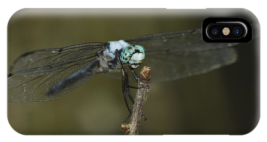 Swift IPhone X Case featuring the photograph Blue Dasher 8668 3297 by Michael Peychich