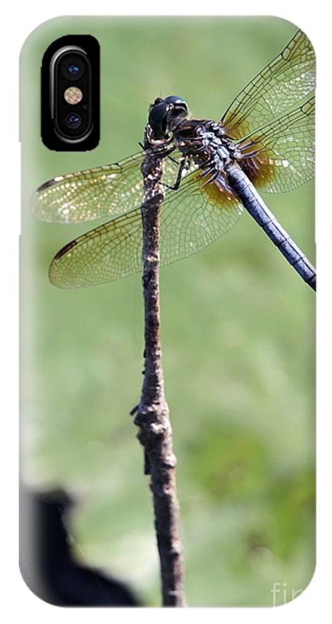Dragonfly IPhone X Case featuring the photograph Blue Dasher Dragonfly Dancer by Sabrina L Ryan