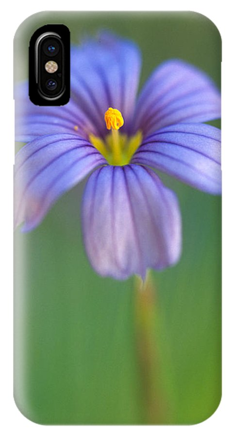Flowers IPhone X Case featuring the photograph Blue Eyed Grass 2 by Kathy Yates
