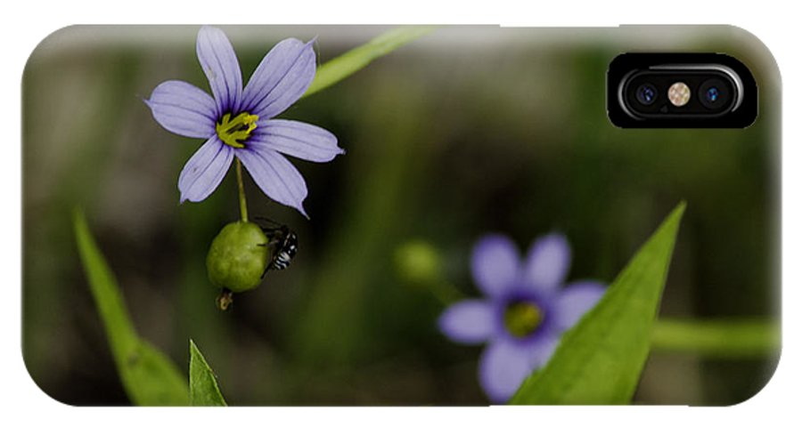 Bug IPhone X Case featuring the photograph Blue Eyed Grass by LeeAnn McLaneGoetz McLaneGoetzStudioLLCcom