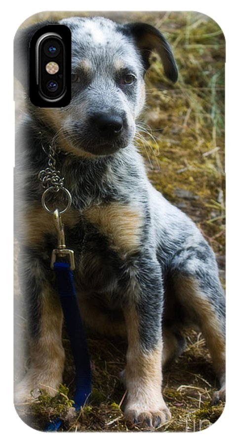 Blue Heeler IPhone X Case featuring the photograph Blue Heeler Pup by Tyra OBryant