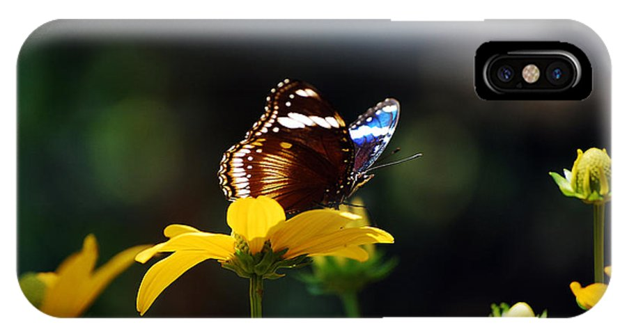 Blue Moon Butterfly IPhone X / XS Case featuring the photograph Blue Moon by Robert Meanor