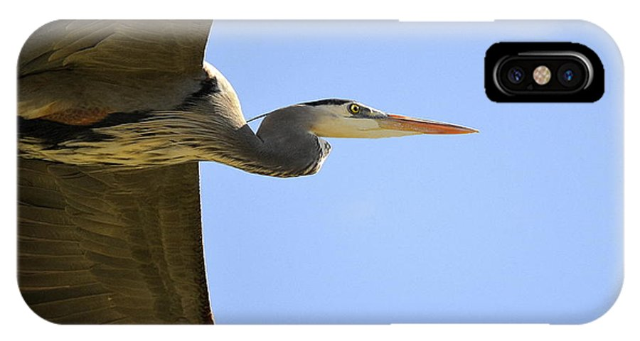 Great Blue Heron IPhone X Case featuring the photograph Blue Shadow by Fraida Gutovich