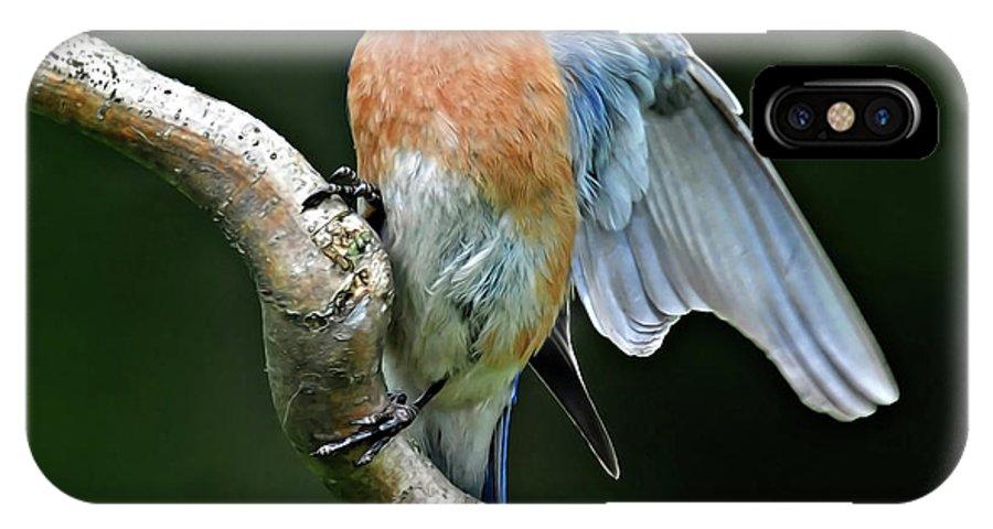 Bluebird IPhone X Case featuring the photograph Bluebird by Dave Mills