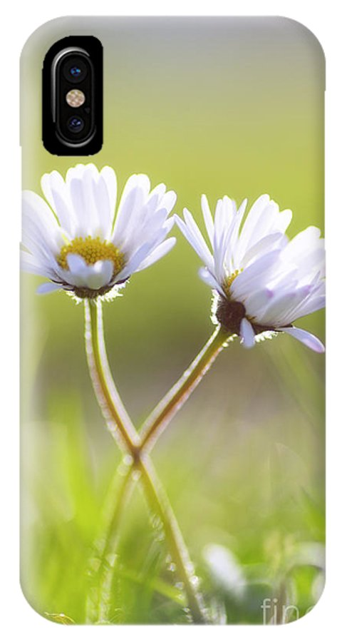 Gaenseblume IPhone X Case featuring the photograph Blumen Liebe by Tanja Riedel