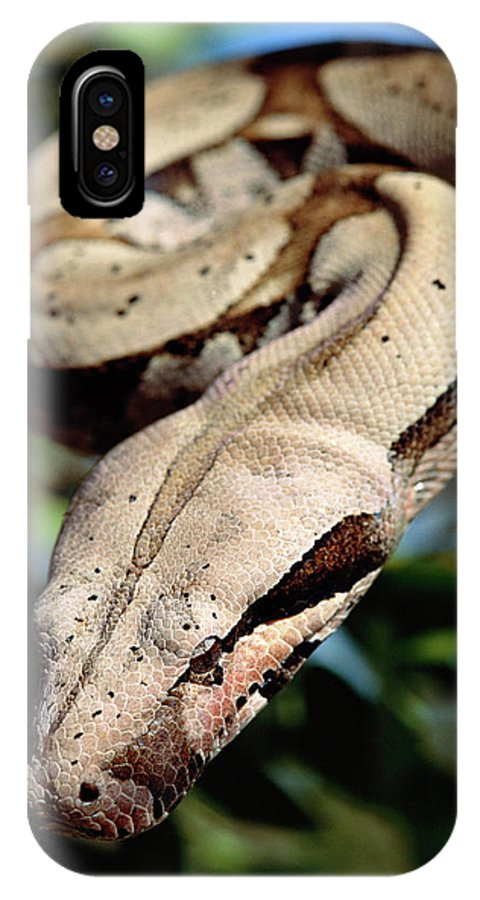 Mp IPhone X Case featuring the photograph Boa Constrictor Boa Constrictor by Claus Meyer