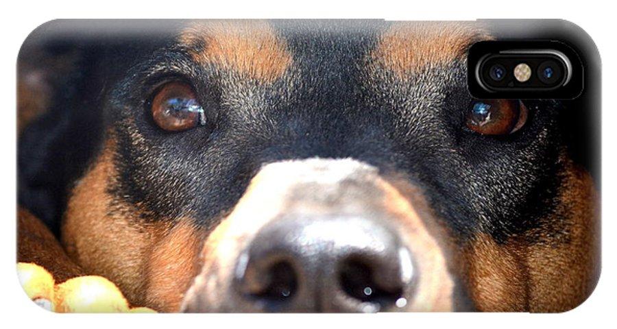 Dog IPhone X Case featuring the photograph Bob Barker by Fraida Gutovich