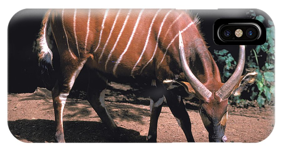 Bongo IPhone X / XS Case featuring the photograph Bongo by Carl Purcell