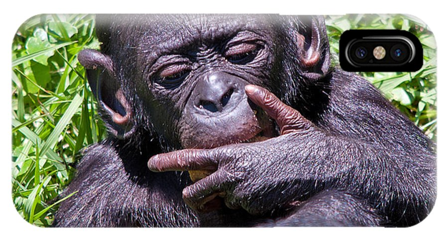 Wildlife IPhone X Case featuring the photograph Bonobo 2 by Kenneth Albin