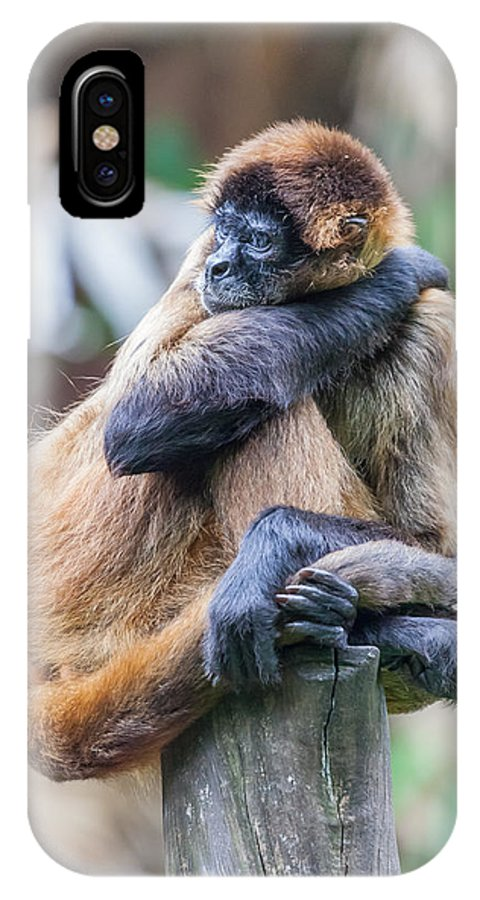 Spider Monkey IPhone X / XS Case featuring the photograph bored Spider Monkey by Craig Lapsley