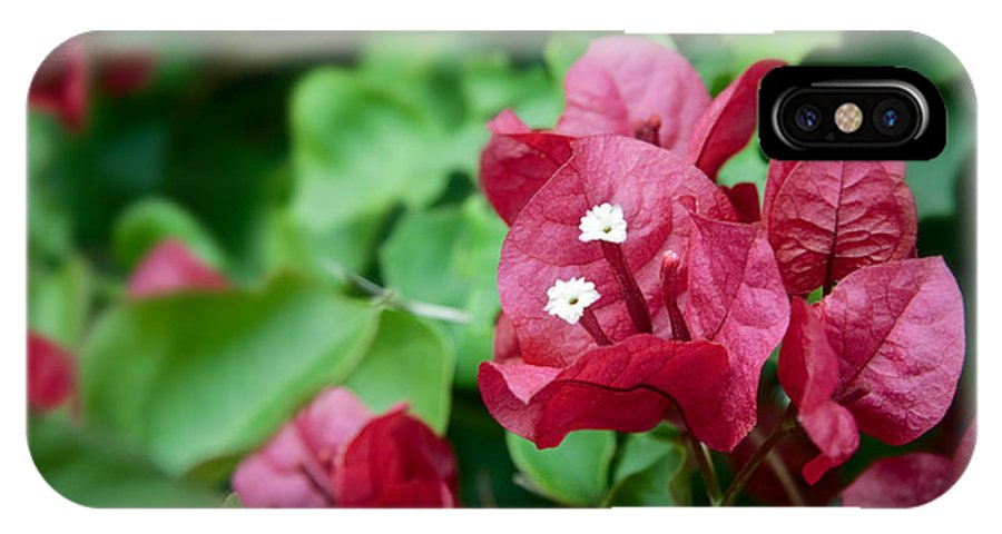Bougainvillea 'san Diego' IPhone X / XS Case featuring the photograph Bougainvillea San Diego Vibrant Red Flowers Closeup by Sherry Curry