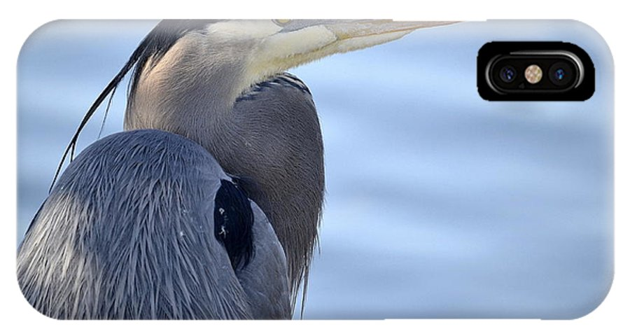 Great Blue Heron IPhone X Case featuring the photograph Boy Blue by Fraida Gutovich