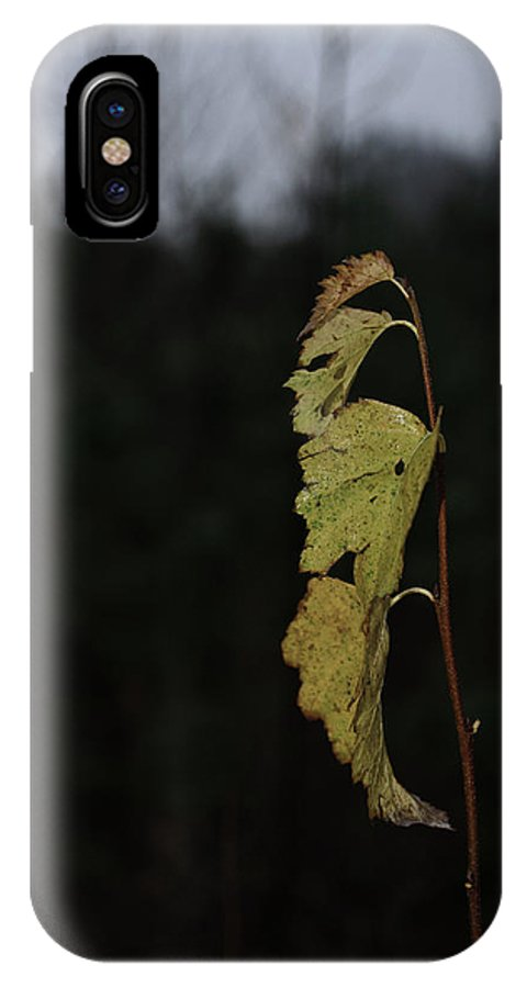 Autumn IPhone X / XS Case featuring the photograph Branch Of Maple by Michael Goyberg