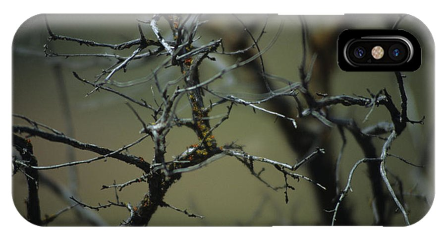 Branches IPhone X Case featuring the photograph Branches by One Rude Dawg Orcutt
