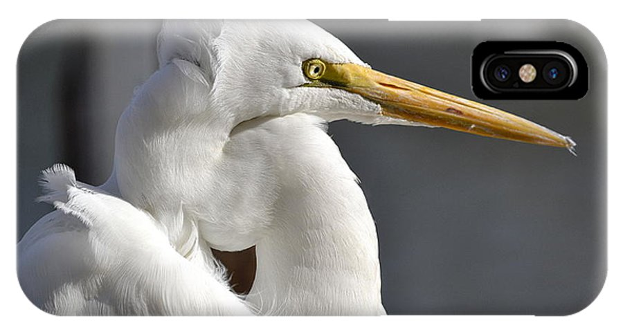 Great White Egret IPhone X Case featuring the photograph Breezy by Fraida Gutovich