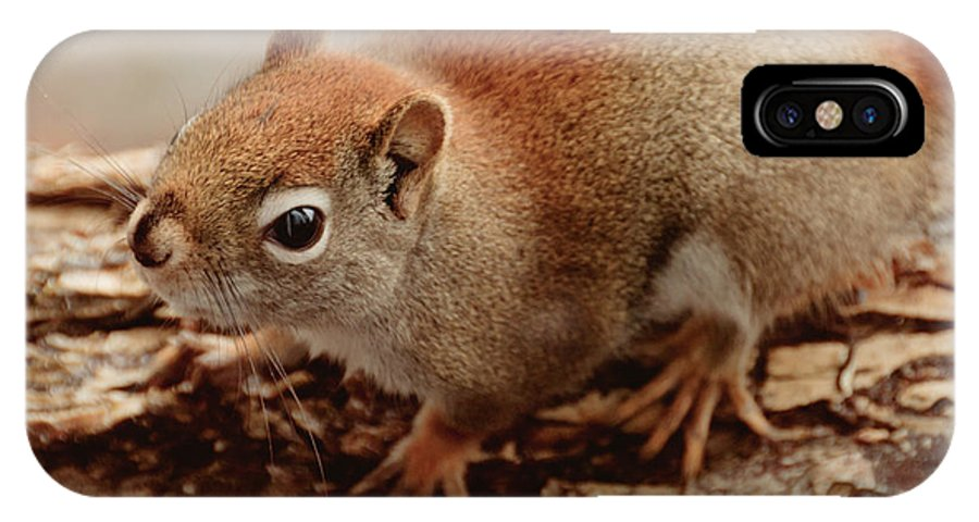 Squirrel IPhone X Case featuring the photograph Bright Eyes by Cheryl Baxter