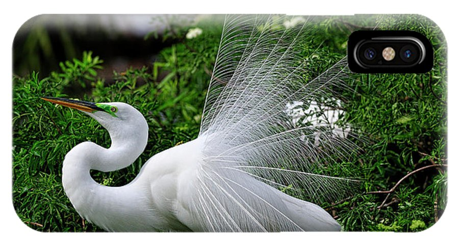 Great White Egret IPhone X Case featuring the photograph Brilliant Feathers by Bill Dodsworth