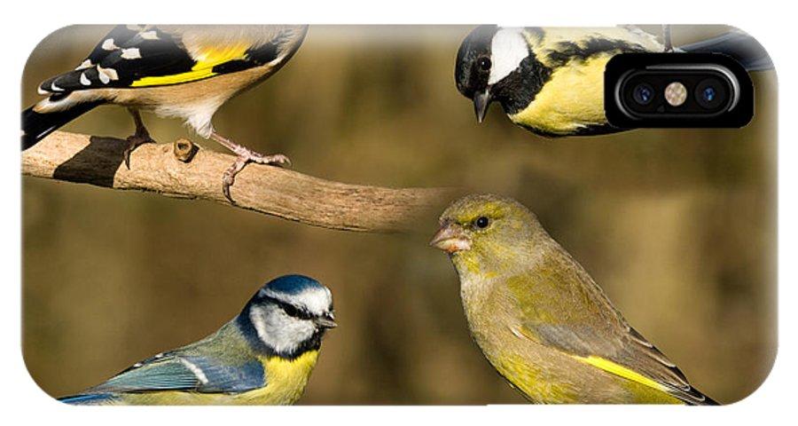 Birds IPhone X Case featuring the photograph British Garden Birds by Steev Stamford