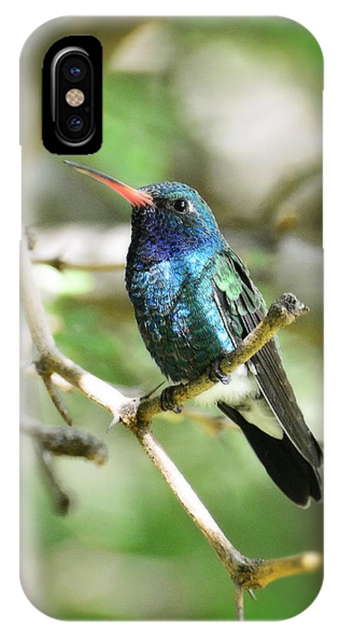 Broad Billed Hummingbird IPhone X Case featuring the photograph Broad-billed Hummingbird by Saija Lehtonen