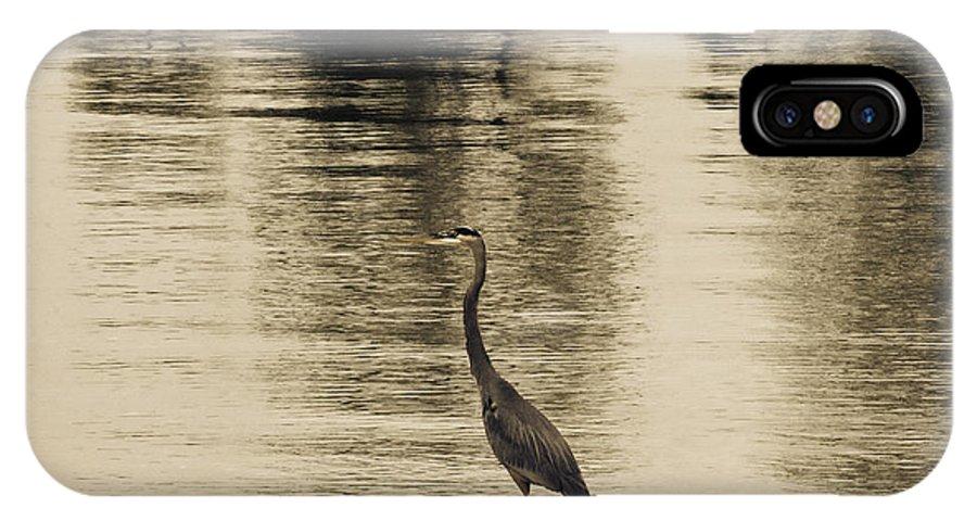 Blue Heron IPhone X / XS Case featuring the photograph Bronze Lake by Douglas Barnard