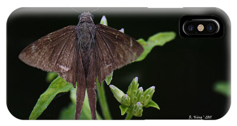 Roena King IPhone X Case featuring the photograph Brown Butterfly Dorantes Longtail by Roena King