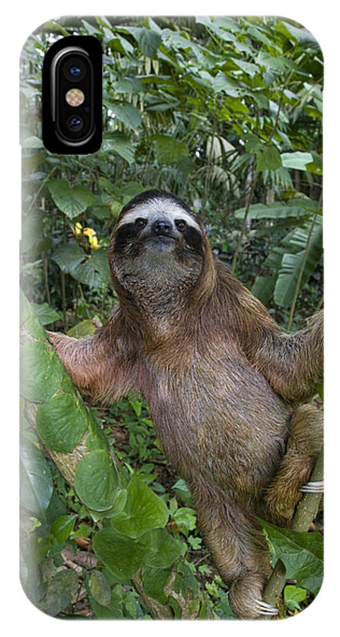 Mp IPhone X Case featuring the photograph Brown-throated Three-toed Sloth by Suzi Eszterhas