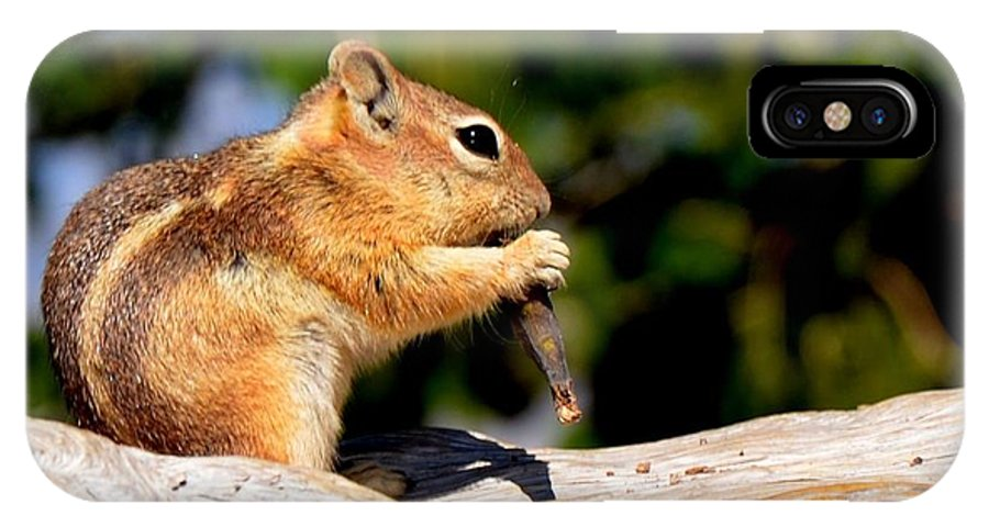 Chipmunk IPhone X Case featuring the photograph Bryce Chipmunk by Mark Bowmer