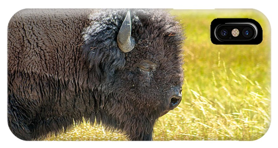 Animals IPhone X Case featuring the photograph Buffalo Portrait by Robert Bales